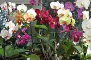 Болезни орхидеи и их лечение с фото
