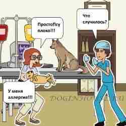 Аллергия на рубец у собаки