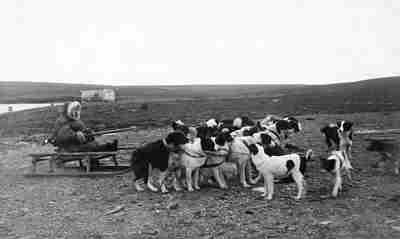 Собачья упряжка, 1911 год