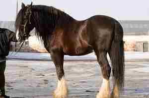 Особенности породы лошади