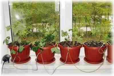 Самодельная гидропоника в домашних условиях: зелень, выращенная в ней, не хуже обычной