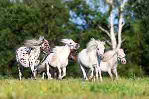 Декоративные лошади