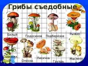В чем польза грибов