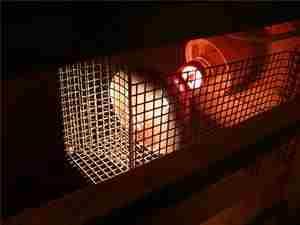 Синяя лампа для обогрева птичника фото
