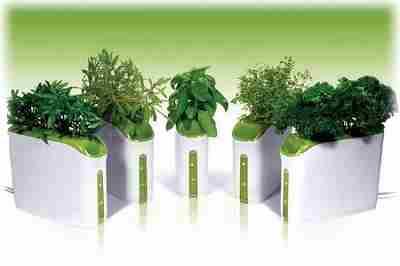 Суперсовременные гидропонные установки для выращивания зелени