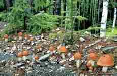 Тихая охота грибы сентябрь-октябрь 2019