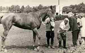 История происхождения будённовской породы лошадей