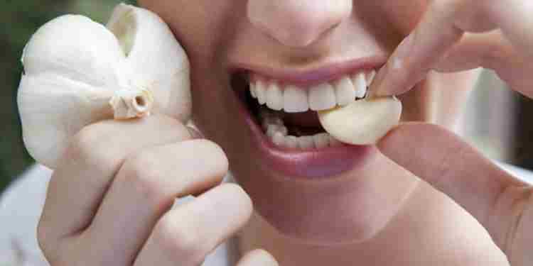 Как часто можно есть чеснок: польза и вред для здоровья человека