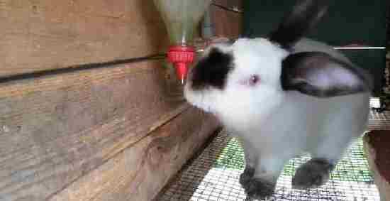 Поилки для кроликов своими руками: чертежи, фото