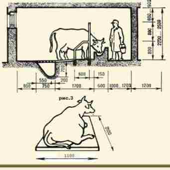 Стандартные стойла имеют следующие размеры: 1,7 метра в длину и в ширину - 1,1 метр. Домашние коровы, выросшие в загоне
