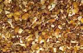 Кукуруза имеет много углеводов. Измельчённая кукуруза усваивается в большем количестве.Любое зерно содержит около 6 процентов жира. Пшеница является самым оптимальным вариантом для кормления кур в домашних условиях. О