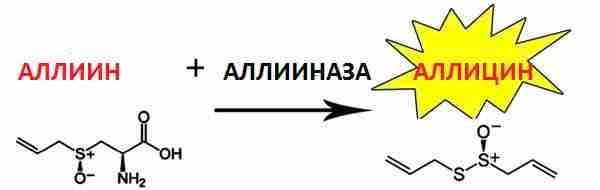 схема синтеза аллицина