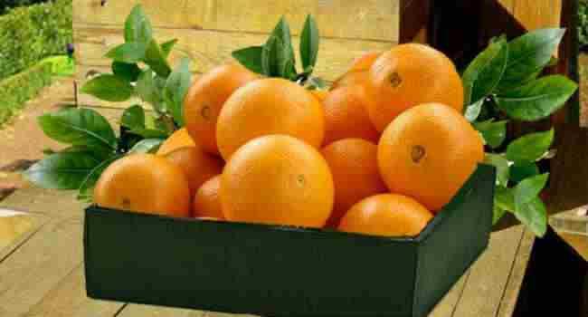 апельсины-состав-свойства-польза