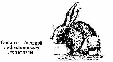 Мокрая мордочка у кроликов