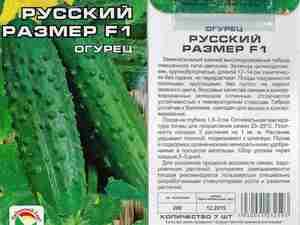 Сорт огурцов для выращивания в домашних условиях