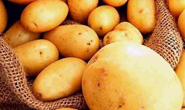 картофель сорт удача