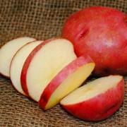 картофель рокко характеристики