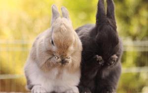 Больные кролики
